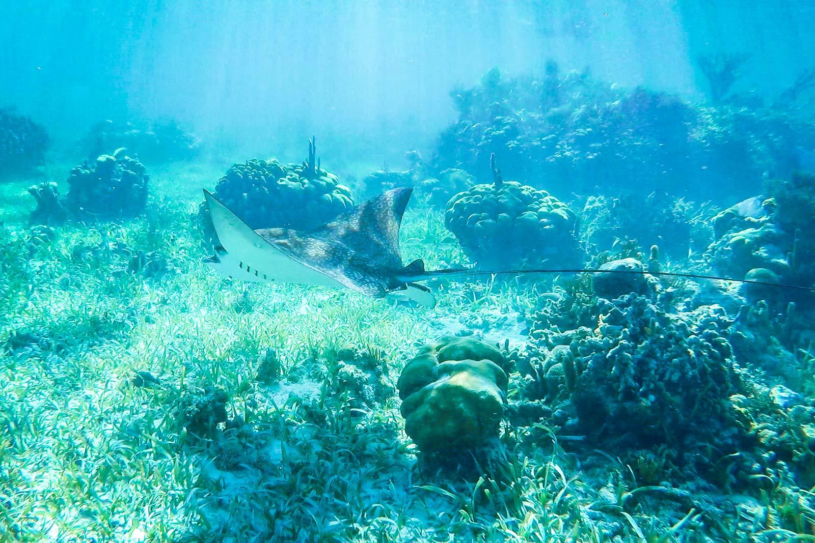 Caye Caulker snorkelling