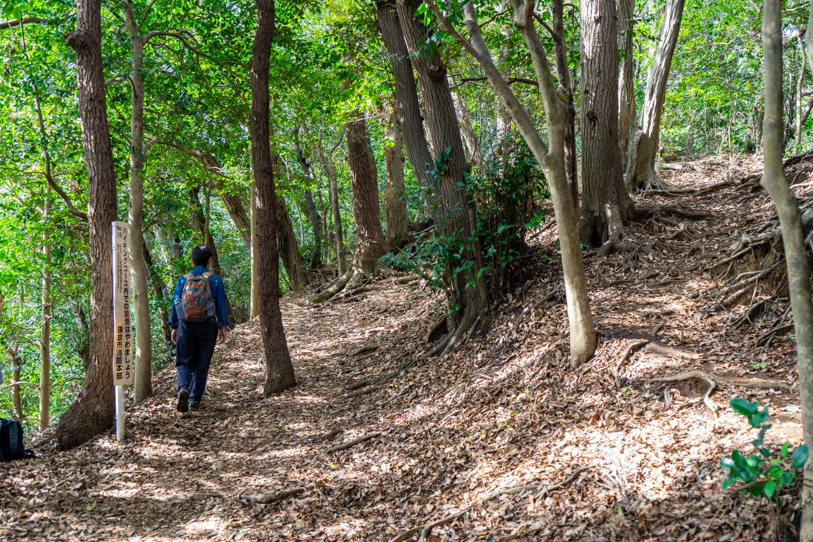Daibutsu Hiking Trail, Kamakura, Japan