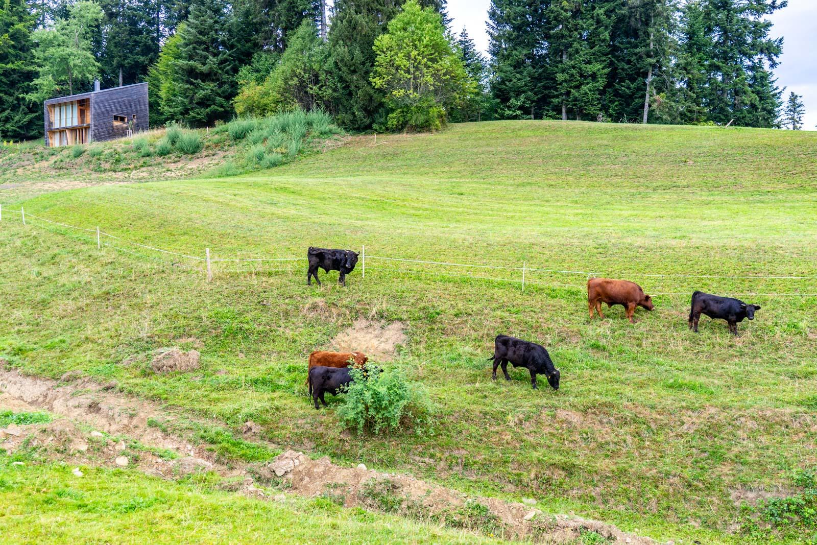 Bregenzerwald Cheese Road, Vorarlberg, Austria