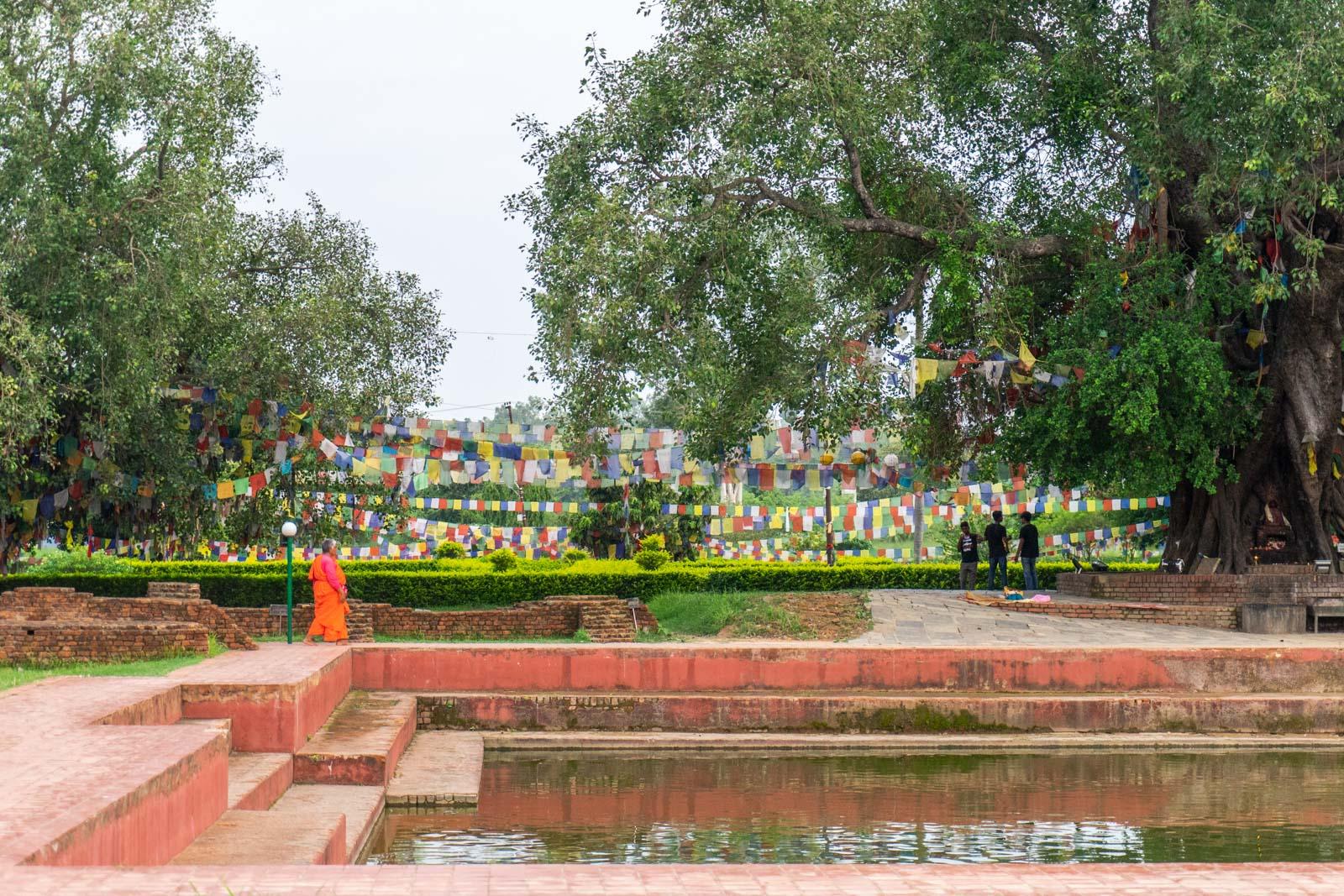 Sacred Pond, Lumbini, Nepal