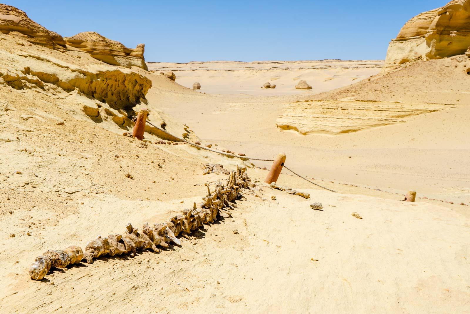 Whale Valley, Wad Al-Hitan, Egypt