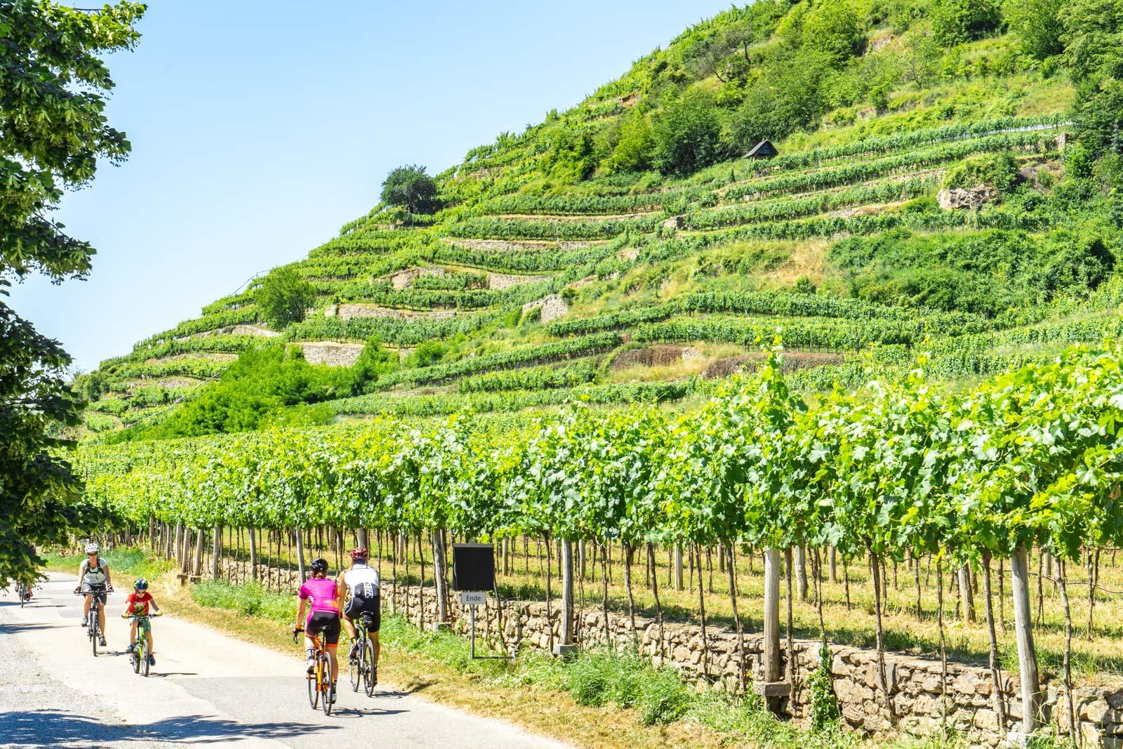 Wachau Valley cycling, Avalon Waterways