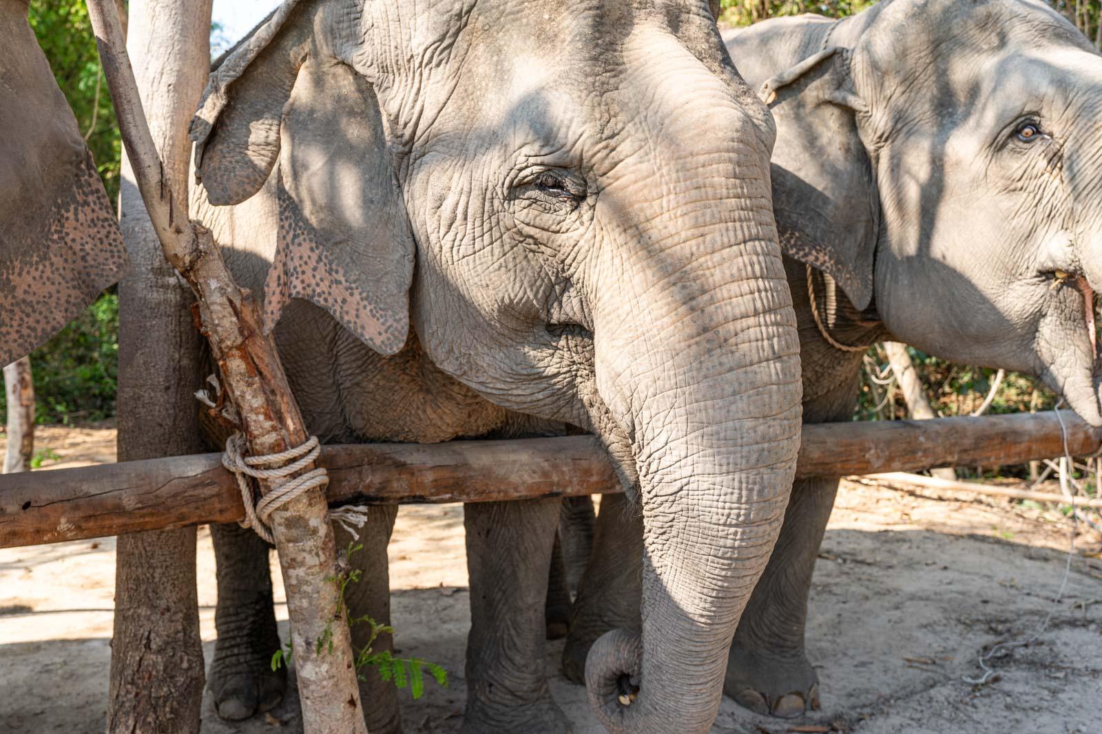 Kulen Elephant Forest, Siem Reap, Cambodia